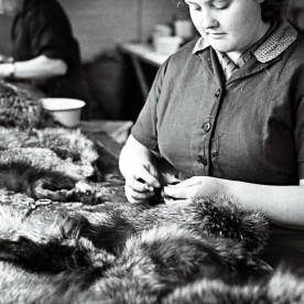 Korraliku kasuka valmistamine on alati nõudnud käelist osavust, püsivust ja teravat silma. Fotol on vabriku köösner tööhoos 1962. aastal.